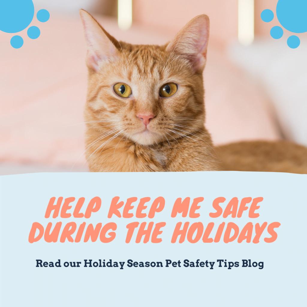 Holiday season pet safety Tips